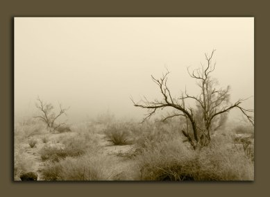 fog over the desert sepia