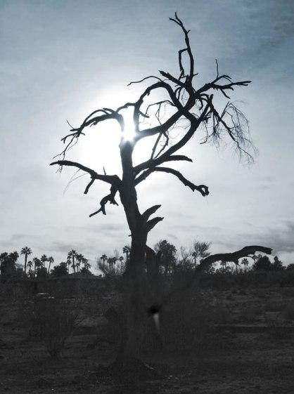 tree silhouette sky